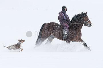 Breitenbach  Deutschland  junge Frau reitet bei starkem Schneefall in Begleitung Ihres Hundes auf einem Kaltblutpferd