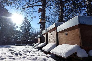 Berlin  Deutschland  Bienenbeuten sind im Winter mit Schnee bedeckt