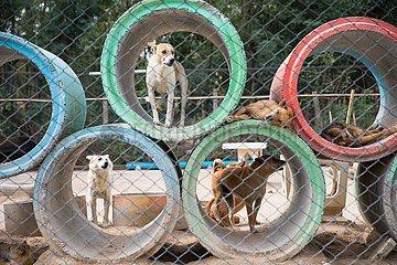 THAILAND-CHONBURI-DOG RESCUE-SANCTUARY