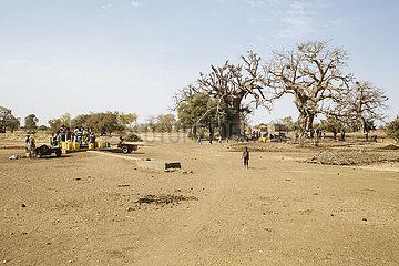 Landschaft mit Baobab Affenbrotbaum