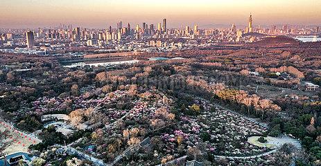 CHINA-JIANGSU-Nanjing-PFLAUMTE BLOSSOM (CN)
