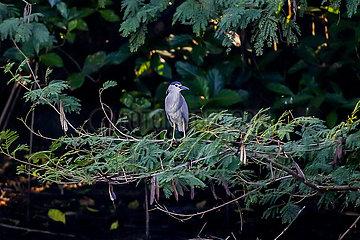 PHILIPPINES-LAS PINAS-WETLAND PARK-MIGRATORY BIRDS