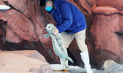 CHINA-SHANGHAI-SEAL CUB (CN)
