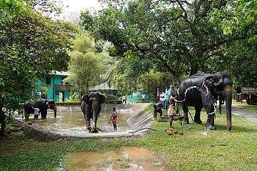 SRI LANKA-COLOMBO-ELEPHANT