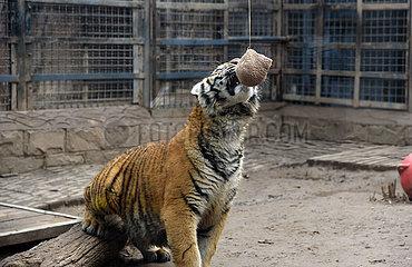 CHINA-SHANDONG-ANIMALS-LANTERN FESTIVAL(CN)