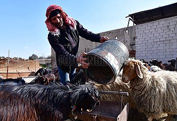 SYRIEN-DAMASKUS-GOAT