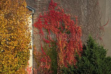 Berlin  Deutschland - Herbstliche Hauswand