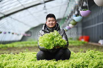 CHINA-HARBIN-GREENHOUSE-AGRICULTURE(CN)