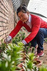 CHINA-XINJIANG-FLOWER PLANTER(CN)