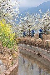 CHINA-SICHUAN-pear-BLOSSOM Tourismus (CN)