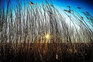 Uferlandschaft mit Weiden an der Elbe