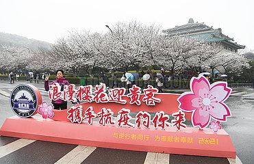 CHINA-HUBEI-WUHAN-KIRSCHBLÜTEN (CN)