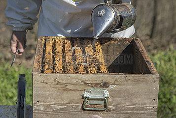 TÜRKEI-SILE-Honig-Produktion-BEEKEEPER