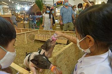 THAILAND-BANGKOK-AUSTRALIAN ANIMAL FESTIVAL