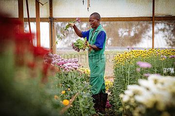 Fiduga Blumenindustrie