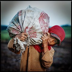 Child Labour at Sugar Cane Plantation