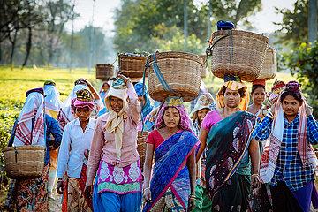 Sozialpastorale Arbeit auf der Teeplantage