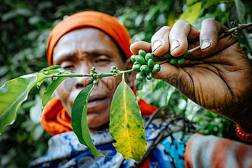 Kaffeebauern und Manja-Familien