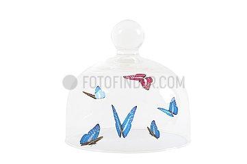 Schmetterlingsvoliere