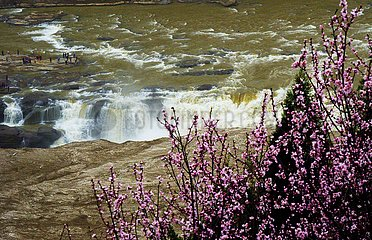CHINA-YELLOW RIVER-Hukou-Wasserfall-BLOSSOMS (CN)
