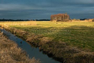 Deutschland  Bremen - Blick auf das Naturschutzgebiet Hollerland