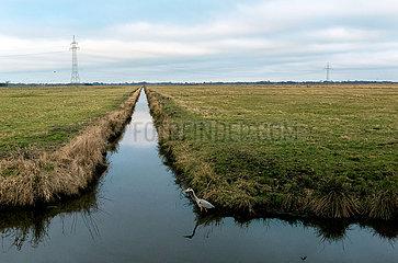 Deutschland  Bremen - Blick auf das Naturschutzgebiet Hollerland  vorne ein Graureiher