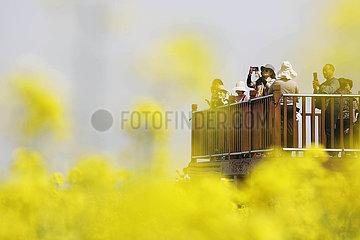# CHINA-BAOFENG-COLE FLOWERS (CN)