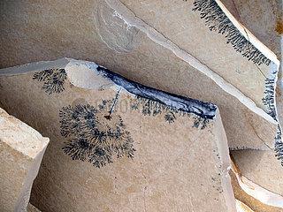 Kalkplatten in Solnhofen mit Dendriten(auskristallisierte Eisen- und Manganverbindungen) aus dem Oberjura vor ca. 150 Mio Jahren.