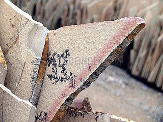 Kalkplatte in Solnhofen mit Dendriten(auskristallisierte Eisen- und Manganverbindungen) aus dem Oberjura vor ca. 150 Mio Jahren.