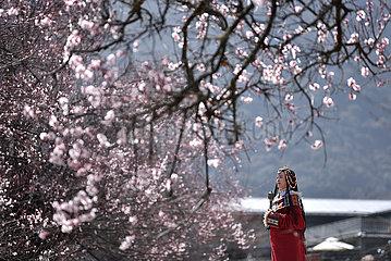 CHINA-TIBET-Nyingchi-peach Blütenfest (CN)