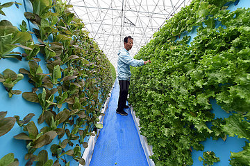 CHINA-ANHUI-HEFEI-Soilless CULTURE VEGETABLES (CN)