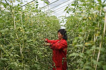 CHINA-CHONGQING-Fengjie-LANDSCHAFT DEVELOPMENT (CN) CHINA-CHONGQING-Fengjie-LANDSCHAFT DEVELOPMENT (CN) CHINA-CHONGQING-Fengjie-LANDSCHAFT DEVELOPMENT (CN) CHINA-CHONGQING-Fengjie-LANDSCHAFT DEVELOPMENT (CN) CHINA-CHONGQING-FENGJIE- LANDSCHAFT DEVELOPMENT (CN) CHINA-CHONGQING-Fengjie-LANDSCHAFT DEVELOPMENT (CN) CHINA-CHONGQING-Fengjie-LANDSCHAFT DEVELOPMENT (CN) CHINA-CHONGQING-Fengjie-LANDSCHAFT DEVELOPMENT (CN) CHINA-CHONGQING-Fengjie-LANDSCHAFT DEVELOPMENT (CN) CHINA -CHONGQING-Fengjie-LANDSCHAFT DEVELOPMENT (CN) CHINA-CHONGQING-Fengjie-LANDSCHAFT DEVELOPMENT (CN) CHINA-CHONGQING-Fengjie-LANDSCHAFT DEVELOPMENT (CN) CHINA-CHONGQING-Fengjie-LANDSCHAFT DEVELOPMENT (CN) CHINA-CHONGQING-Fengjie-LANDSCHAFT DEVELOPMENT (CN) CHINA-CHONGQING-Fengjie-LANDSCHAFT DEVELOPMENT (CN)