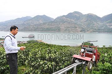 CHINA-CHONGQING-Navelorange ORCHARD-TRANSPORTER (CN)