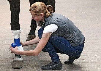 Muenchehofe  Tieraerztin legt einen Roehrbeinverband bei einer Verletzung an