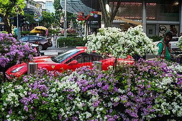 Singapore  Republic of Singapore  Arbeiter pflegt bluehende Buesche neben Sportwagen an der Orchard Road