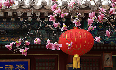 #CHINA-BEIJING-TEMPLE-FLOWERS (CN)