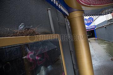 Deutschland  Hamburg - Taube nistet am Eingang zum Bordell Paradise Point of Sex an der Reeperbahn  Stadtteil St.Pauli in der Corona-Tristesse