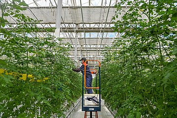 CHINA-JILIN-AGRICULTURE-GREEN HOUSE (CN)
