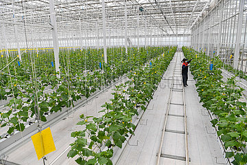 CHINA-JILIN-AGRICULTURE-GREEN HOUSE(CN)