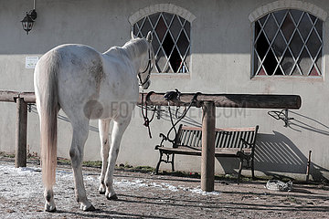 Bruchmuehle  Pferd steht allein an einer Anbindestange