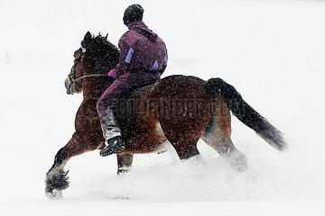 Breitenbach  Deutschland  junge Frau reitet bei starkem Schneefall auf einem Kaltblutpferd