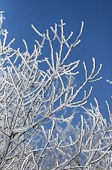 Altlandsberg  Deutschland  Zweige eines Baumes sind mit Raureif bedeckt
