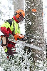 Kretscham  Deutschland  Forstarbeiter faellt im Winter einen Baum