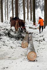 Kretscham  Holzrueckepferde ziehen im verschneiten Wald zwei gefaellte Baumstaemme hinter sich her