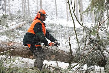 Kretscham  Deutschland  Forstarbeiter entastet im Winter einen gefaellten Baum
