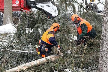 Kretscham  Deutschland  Forstarbeiter entasten im Winter einen gefaellten Baum