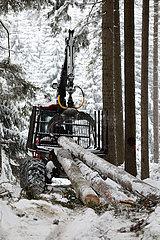 Kretscham  Deutschland  gefaellte Baumstaemme werden im Wald auf einen Rueckezug geladen