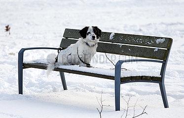 Graditz  Deutschland  Hund sitzt angeleihnt auf einer schneebedeckten Parkbank
