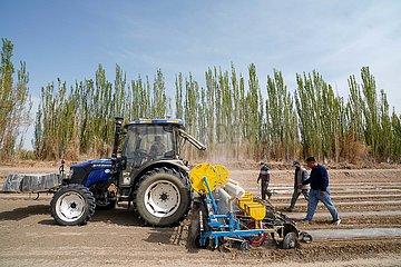 CHINA-XINJIANG-AGRICULTURE-COTTON FARMER (CN)