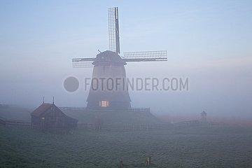 THE NETHERLANDS-MORNING MIST-MILLS